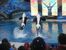 Sprachaufenthalt USA - Seaworld
